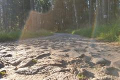 gosciniec-niborski-30