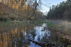 las-miejski-olsztyn-04