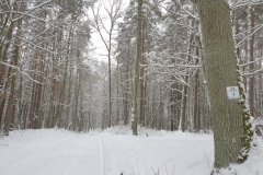 petla-lansk-p50