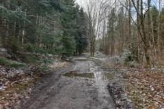 """Las miejski. Droga od lądowiska sterowców w kierunku elektrowni """"Łyna"""""""