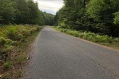 Droga w lasach łańskicj
